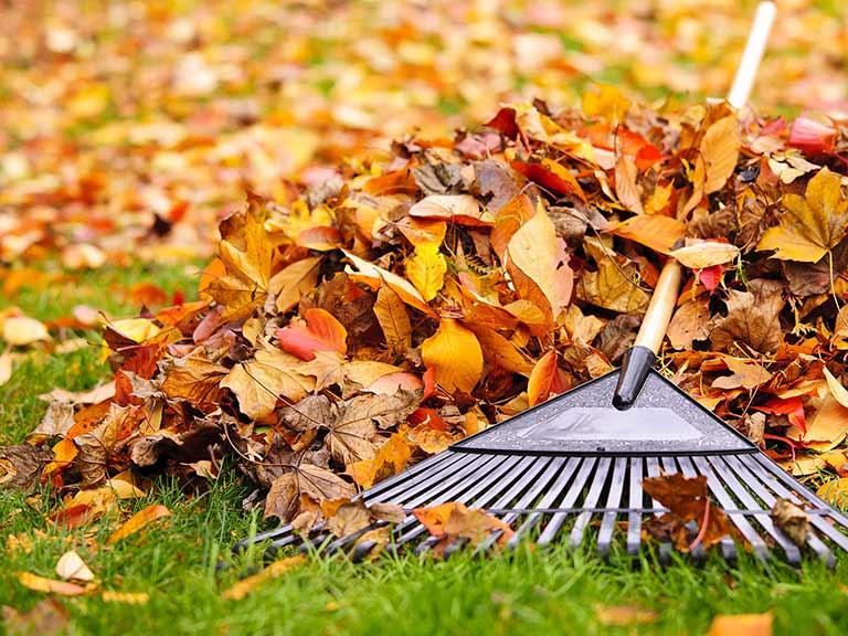 autumn-lawn-care